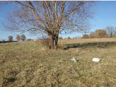 Plan de gestion des zones humides et espaces naturels de la ZAC ACTIVAL sur le territoire de la commune des Olmes (69)