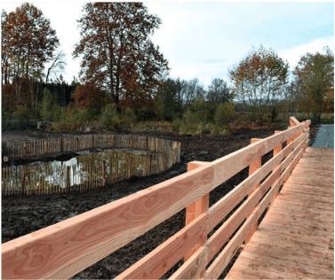 Restauration de la zone humide de la petite Saône à Trévoux (01)